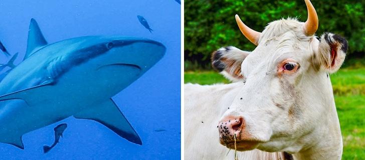 16 факта за животните, за които не знаят дори всички зоолози