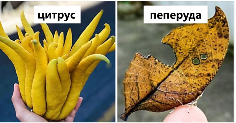 Артрит на пръстите на ръцете: първите симптоми и лечение на ревматоиден заболявания